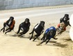 Swindon Greyhounds